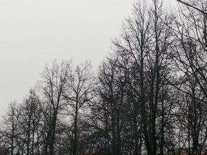 Усиление порывов ветра до 22 м/с ожидается в Нижегородской области в пятницу, 13-го