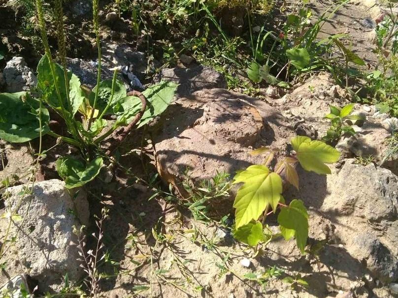 Болванку противотанковой мины обнаружили на Казанаской набережной - фото 1