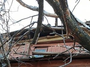 Стала известна судьба жителей разрушенного деревом дома на Студеной