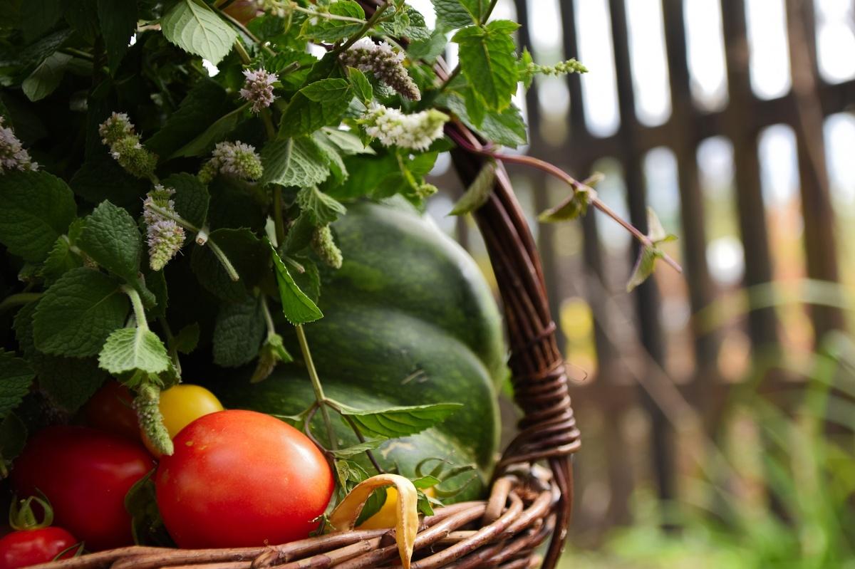 Эти пять продуктов можно вырастить прямо на подоконнике - фото 1
