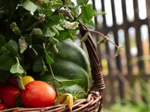 Эти пять продуктов можно вырастить прямо на подоконнике