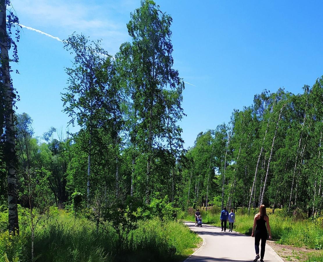 1 665 новых деревьев и кустарников высадят в Светлоярском парке - фото 1