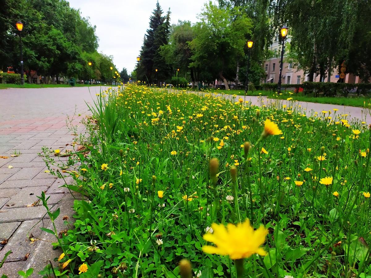 Юбилейный бульвар преобразится к 800-летию Нижнего Новгорода - фото 1