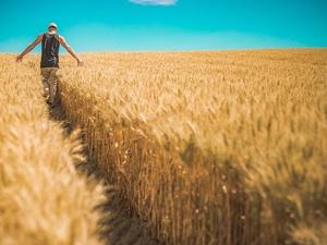 Производство картофеля и зерна существенно выросло в Нижегородской области за 2019 год