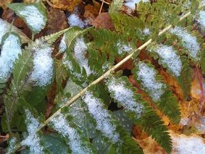 Ночные заморозки до -5°С и мокрый снег придут в Нижегородскую область к концу недели