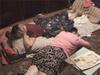 Нехорошую квартиру «обезвредили» в Нижнем Новгороде
