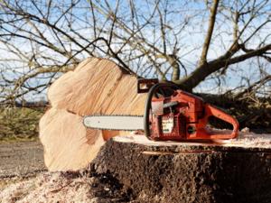 Житель Бора нарубил деревьев на 8 месяцев лишения свободы