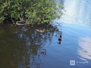 Более 90 млн рублей выделено на очистку трех рек в Нижегородской области